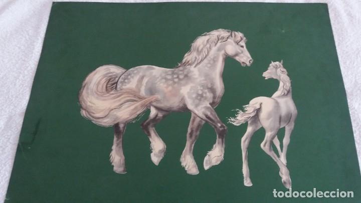 Segunda Mano: Laminas de caballos - Foto 7 - 177591279