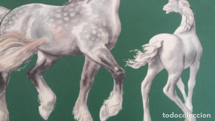 Segunda Mano: Laminas de caballos - Foto 12 - 177591279