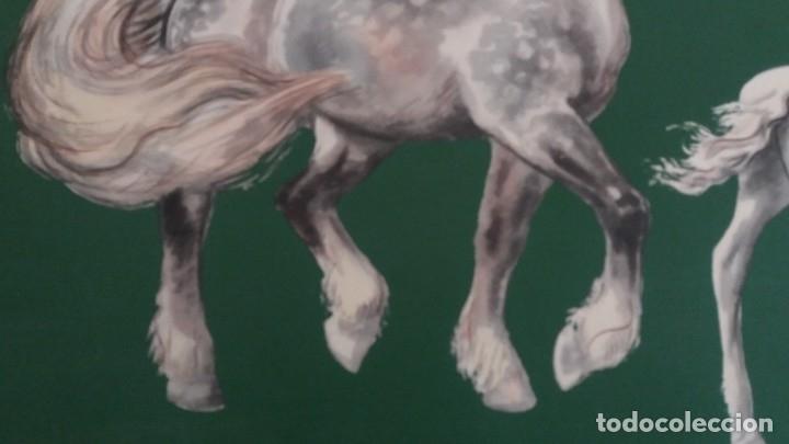 Segunda Mano: Laminas de caballos - Foto 13 - 177591279