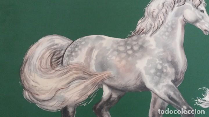 Segunda Mano: Laminas de caballos - Foto 14 - 177591279