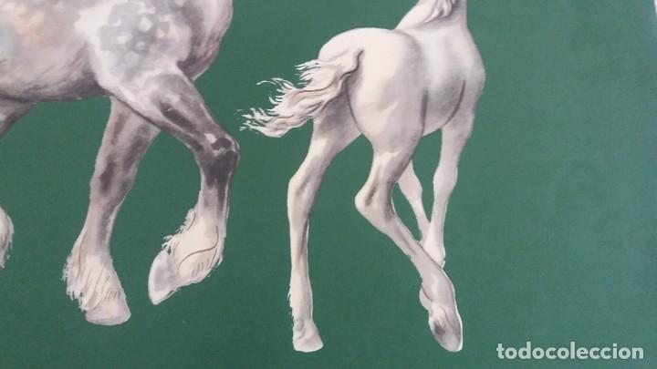 Segunda Mano: Laminas de caballos - Foto 16 - 177591279