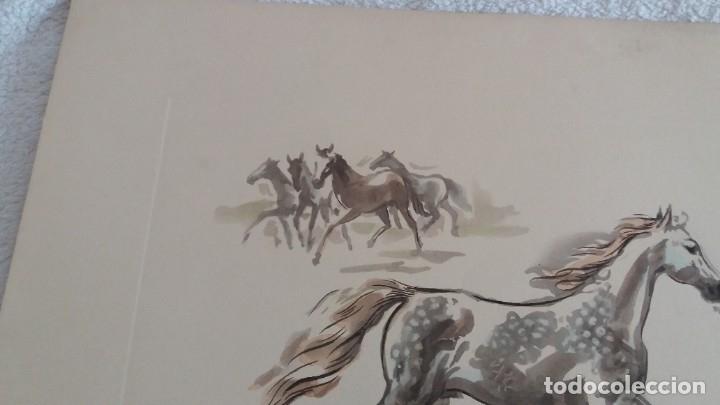Segunda Mano: Laminas de caballos - Foto 4 - 177592222