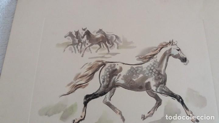 Segunda Mano: Laminas de caballos - Foto 5 - 177592222