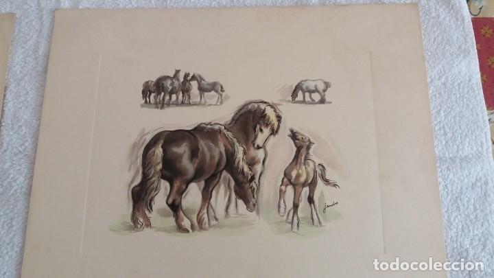Segunda Mano: Laminas de caballos - Foto 8 - 177592222