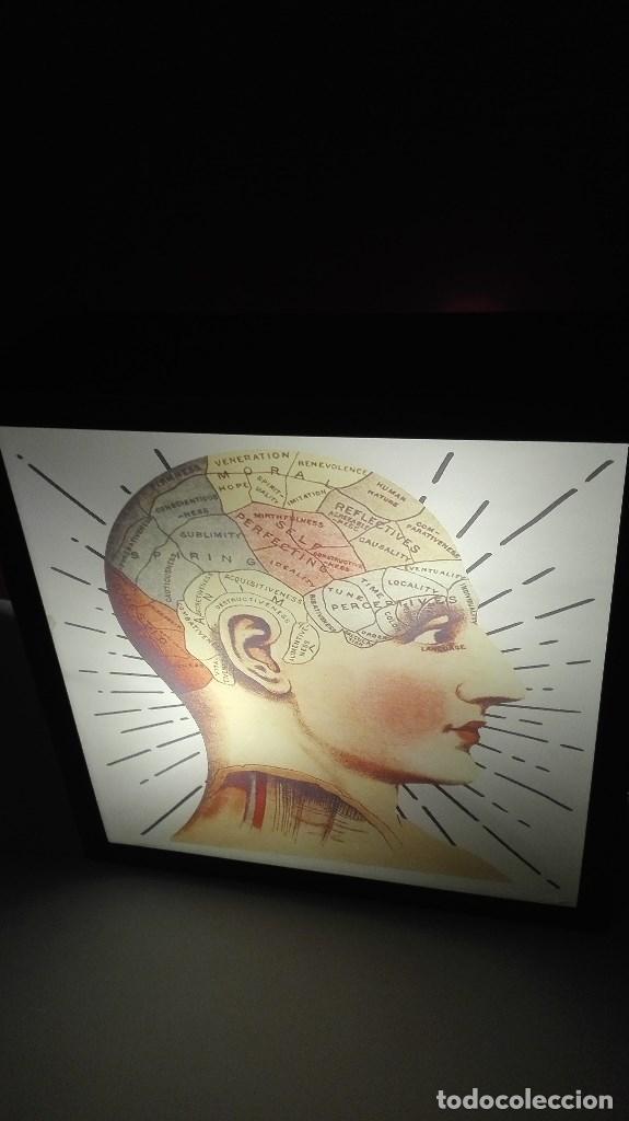 Segunda Mano: LAMPARA CAJA DE LUZ ANATOMIA - Foto 11 - 194213498