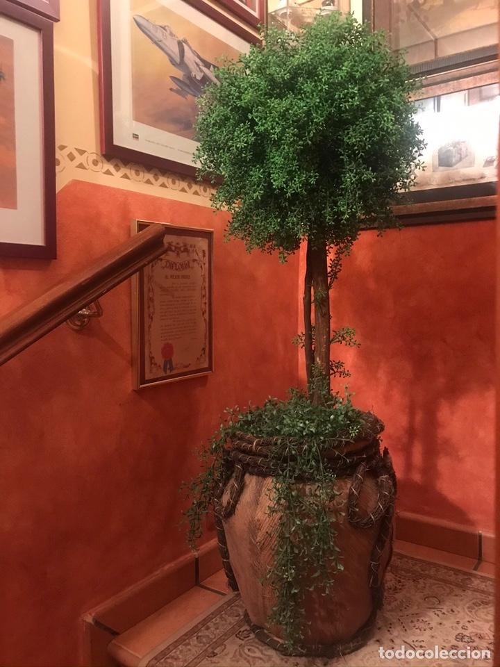 Segunda Mano: Árbol grande para decoración - Foto 2 - 205231827