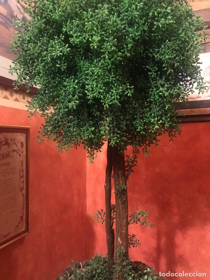Segunda Mano: Árbol grande para decoración - Foto 4 - 205231827