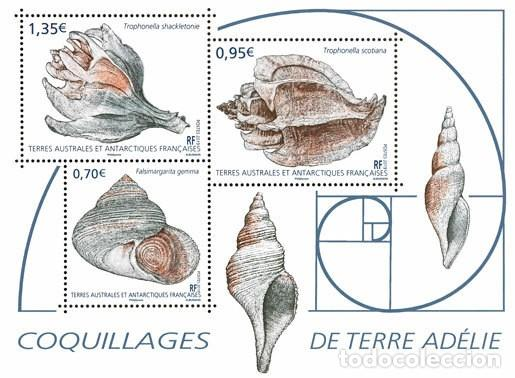 Sellos: TAAF 2019 - Coquillages de Terre Adélie sheet mnh - Foto 1 - 147716129
