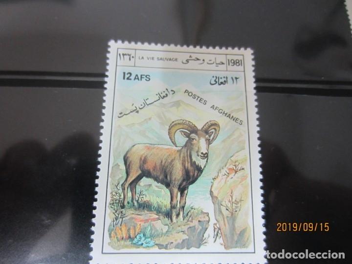 AFGANISTAN 1981 - 1 V. NUEVO (Sellos - Extranjero - Asia - Afganistán)