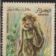 Sellos: ARGELIA 1981 SCOTT 673 SELLO º FAUNA MONOS BARBARY MACAQUE (MACACA SYLVANUS) MICHEL 784 YVERT 745. Lote 215929005