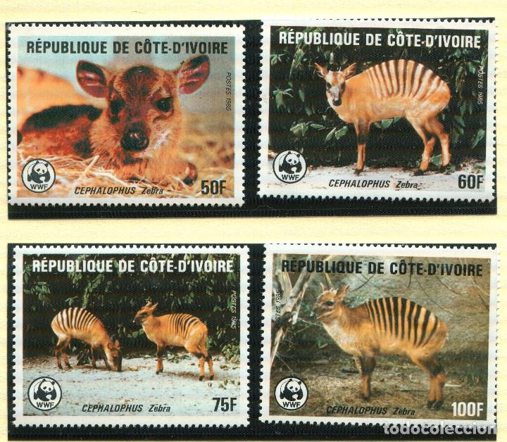 COSTA DE MARFIL 1985 MI 881 A 884 4 SELLOS MNH + 4 FDC + 4 TARJETAS MAXIMAS WWF (Sellos - Extranjero - África - Costa de Marfil)