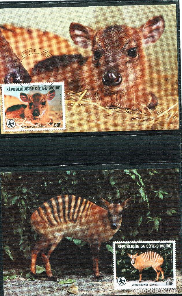 Sellos: COSTA DE MARFIL 1985 Mi 881 a 884 4 sellos MNH + 4 FDC + 4 tarjetas maximas WWF - Foto 4 - 106912519