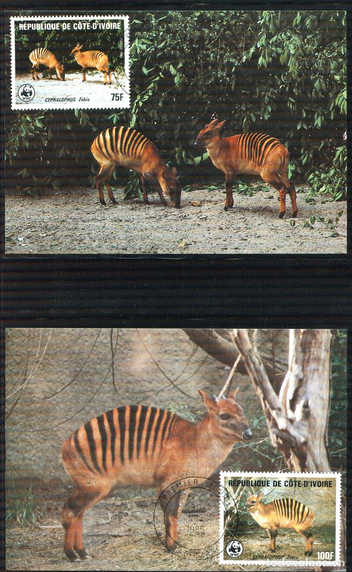 Sellos: COSTA DE MARFIL 1985 Mi 881 a 884 4 sellos MNH + 4 FDC + 4 tarjetas maximas WWF - Foto 5 - 106912519