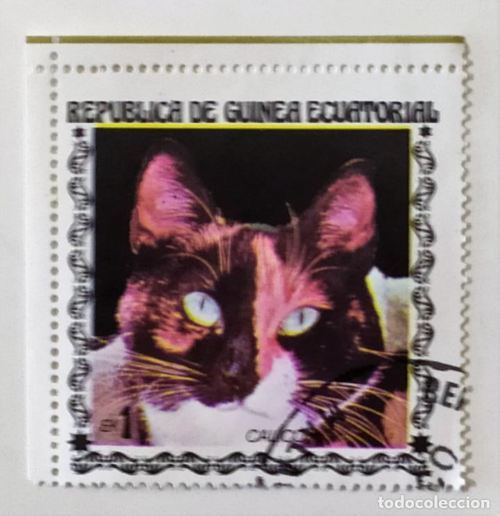 SELLO DE GUINEA ECUATORIAL 1 E - 1978 - GATOS - USADO SIN SEÑAL DE FIJASELLOS (Sellos - Extranjero - África - Guinea Ecuatorial)
