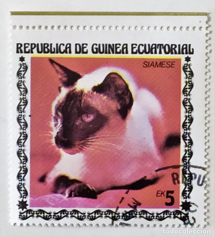 SELLO DE GUINEA ECUATORIAL 5 E - 1978 - GATOS - USADO SIN SEÑAL DE FIJASELLOS (Sellos - Extranjero - África - Guinea Ecuatorial)