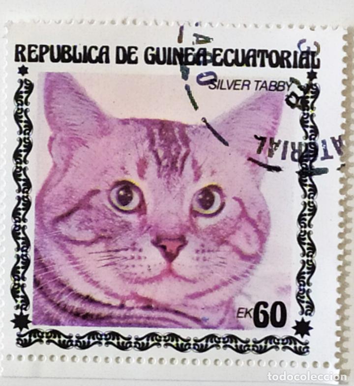 SELLO DE GUINEA ECUATORIAL 60 E - 1978 - GATOS - USADO SIN SEÑAL DE FIJASELLOS (Sellos - Extranjero - África - Guinea Ecuatorial)