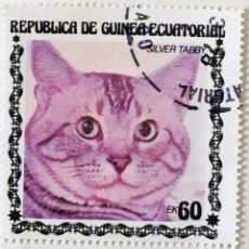 Sellos: SELLO DE GUINEA ECUATORIAL 60 E - 1978 - GATOS - USADO SIN SEÑAL DE FIJASELLOS. Lote 242053400