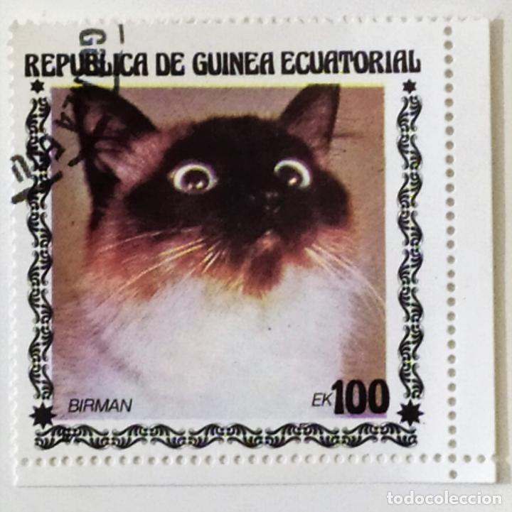 SELLO DE GUINEA ECUATORIAL 100 E - 1978 - GATOS - USADO SIN SEÑAL DE FIJASELLOS (Sellos - Extranjero - África - Guinea Ecuatorial)