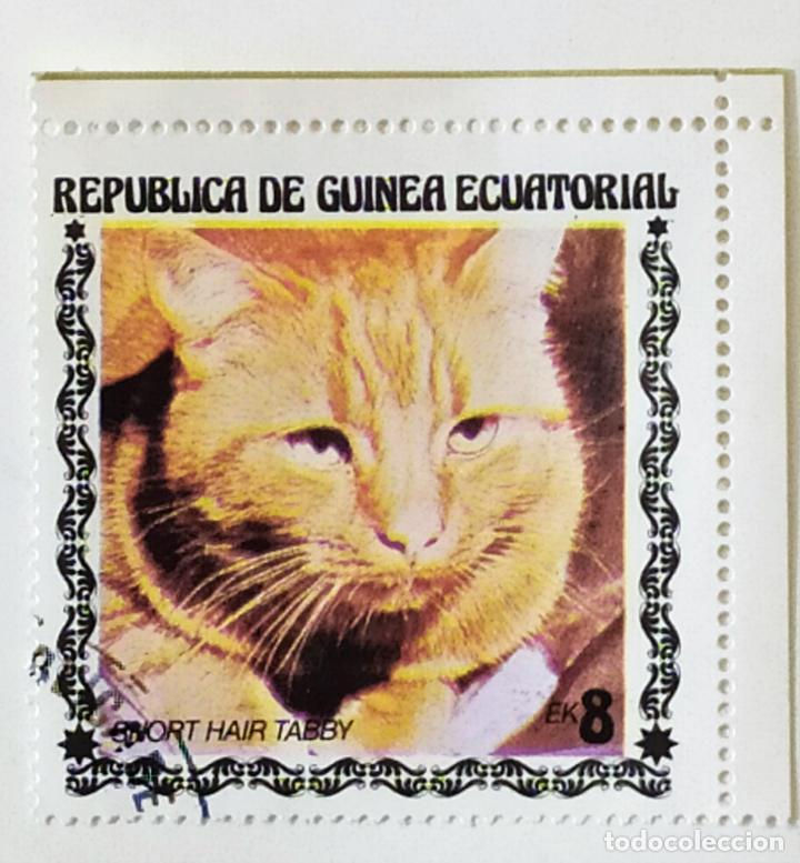 SELLO DE GUINEA ECUATORIAL 8 E - 1978 - GATOS - USADO SIN SEÑAL DE FIJASELLOS (Sellos - Extranjero - África - Guinea Ecuatorial)