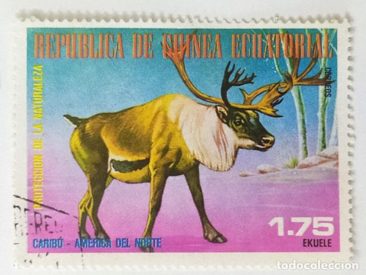 SELLO DE GUINEA ECUATORIAL 1,75 E - 1977 - ANIMALES NORTEAMERICA - USADO SIN SEÑAL DE FIJASELLOS (Sellos - Extranjero - África - Guinea Ecuatorial)