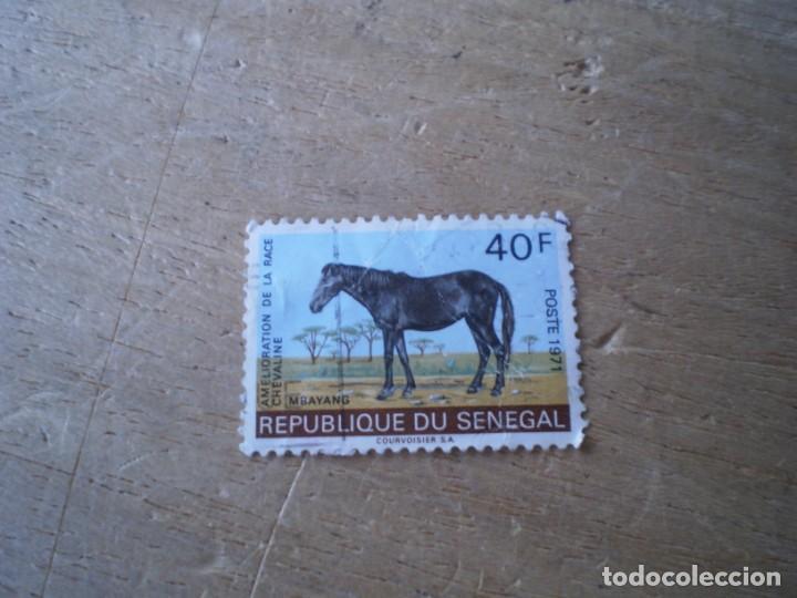 SENEGAL CABALLO 40F USADO (Sellos - Extranjero - África - Senegal)