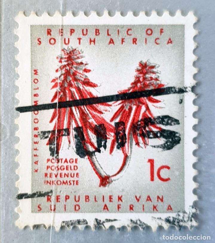 SOUTH-AFRICA - ERYTHINA LYSISTEMON - 1 C - 1961 (Sellos - Extranjero - África - Sudáfrica)