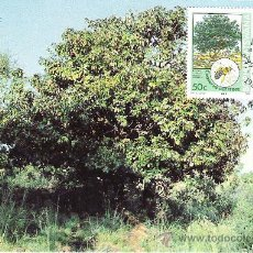 Francobolli: BOPHUTHATSWANA. TARJETA MAXIMA. CONSERVACION DE LOS ARBOLES. 2004. Lote 18723008