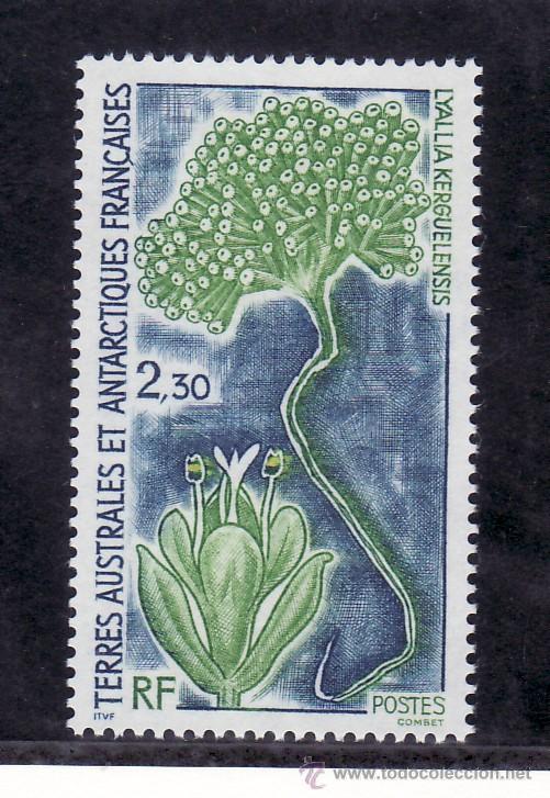 TIERRAS AUSTRALES & ANTARTICAS FRANCESA 175 SIN CHARNELA, FLORES ANTARTICA (Sellos - Extranjero - África - Otros paises)