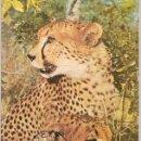Sellos: MOZAMBIQUE & MÁXIMO, FAUNA, LEOPARDO, ACINONYX JUBATUS, 1976 (3795). Lote 165946890
