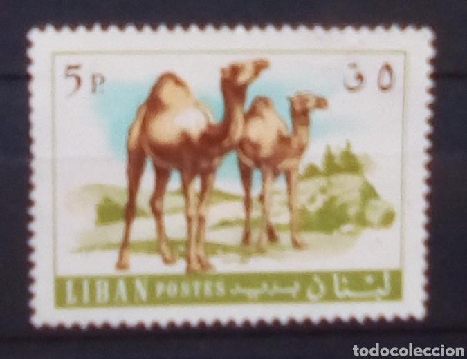 LIBANO CAMELLOS SELLO USADO (Sellos - Extranjero - África - Otros paises)