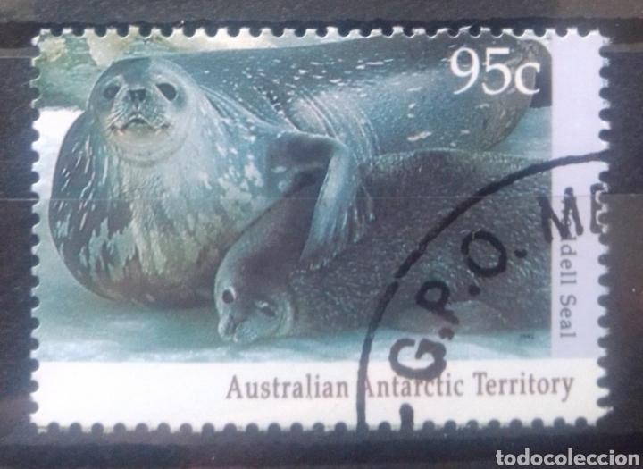 AUSTRALIA TERRITORIO ANTÁRTIDA LEONES MARINOS SELLO USADO (Sellos - Extranjero - Oceanía - Australia)