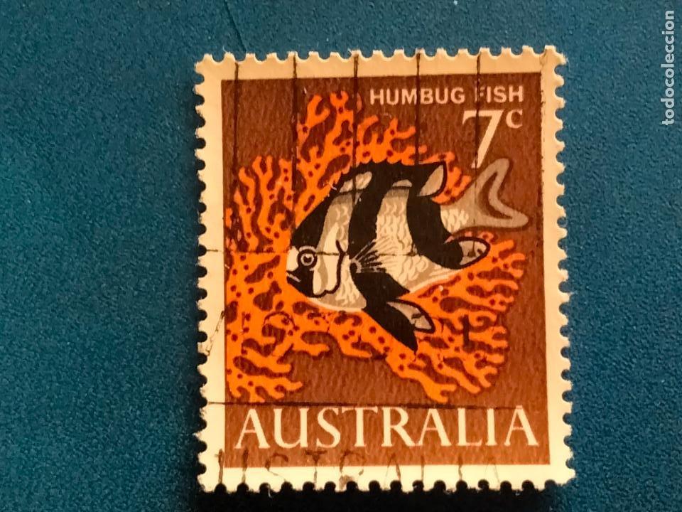 AUSTRALIA. FAUNA, PEZ. HUMBUG FISH. YVERT 325. (Sellos - Extranjero - Oceanía - Australia)