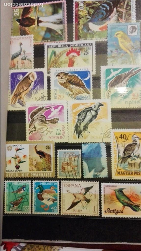 LOTE 88 SELLOS DE AVES PAJAROS MIRA FOTOS Y 17 SELLOS DE ESPAÑA (Sellos - Temáticas - Aves)