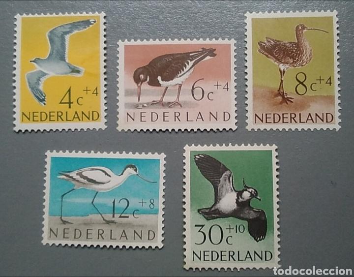 5 SELLOS HOLANDA 733 / 738 PÁJAROS AVES AÑO 1961 NUEVO (Sellos - Temáticas - Aves)