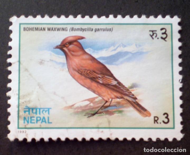 1992 NEPAL BOMBYCILLA GARRULUS (Sellos - Temáticas - Aves)