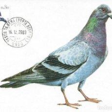 Sellos: 2003. PORTUGAL. MÁXIMA/MAXIMUM CARD. COLUMBA LIVIA. FAUNA. PALOMA/DOVE. BIRDS.. Lote 145111614