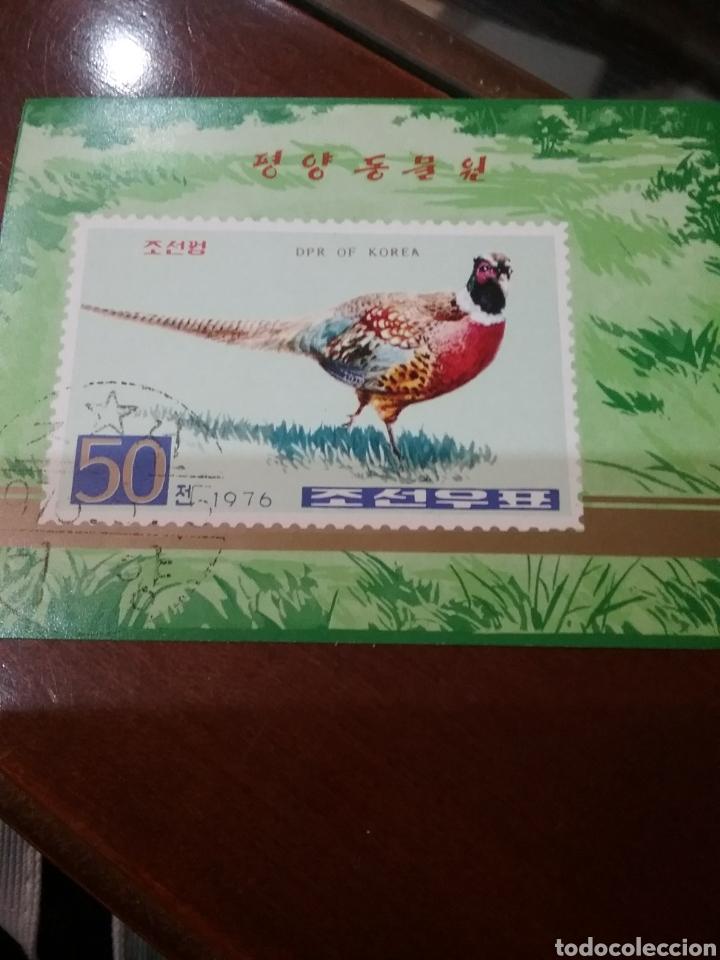 HB COREA NORTE MTDA (DPKR)/1976/FAISAN COMUN/FAUNA/AVES/ANIMALES/NATURALEZA/ (Sellos - Temáticas - Aves)
