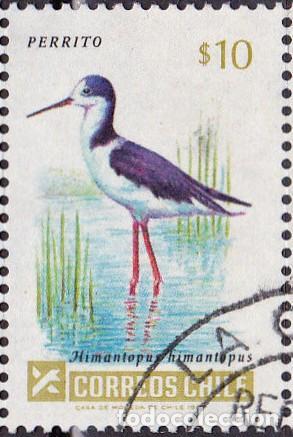 1985 - CHILE - AVES - CIGÜEÑUELA COMUN - MICHEL 1075 (Sellos - Temáticas - Aves)