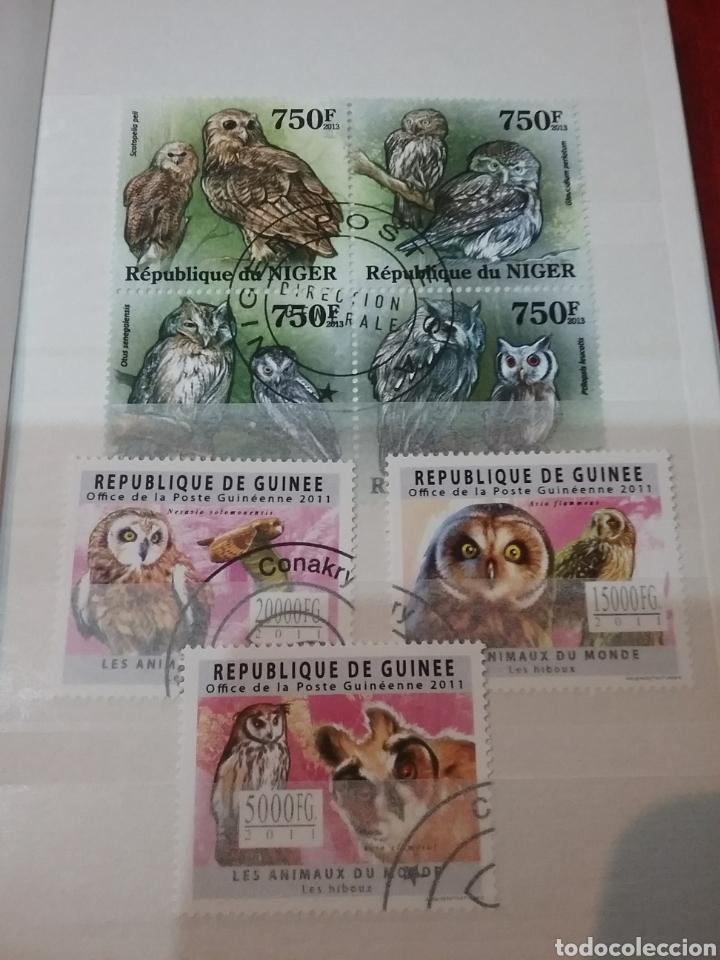 Sellos: MINI-Clasificador Buhos/Mismo precio; con o sin clasificador/aves rapaces/mochuelo/lechuz/VER FOTOS - Foto 8 - 160887401