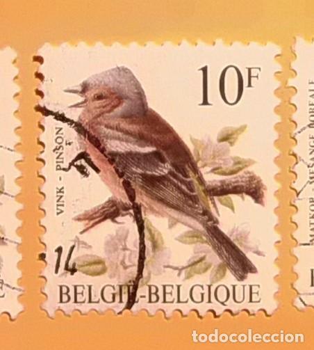 BÉLGICA - AVES - VINK PINSON - PINZON COMÚN. (Sellos - Temáticas - Aves)