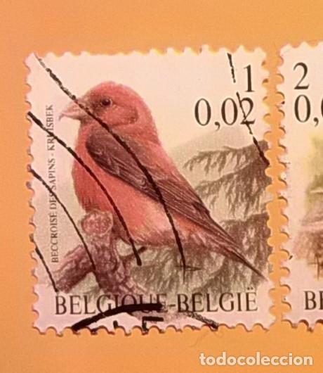 BÉLGICA - AVES - BEC-CROISÉ DES SAPINS - PIQUITUERTO COMÚN. (Sellos - Temáticas - Aves)