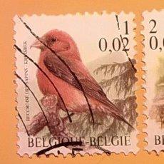 Sellos: BÉLGICA - AVES - BEC-CROISÉ DES SAPINS - PIQUITUERTO COMÚN.. Lote 190384403