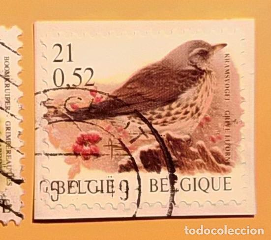 BÉLGICA - AVES - ZORZAL REAL. (Sellos - Temáticas - Aves)