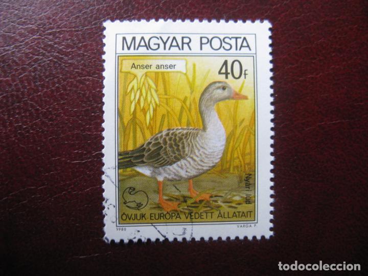 +HUNGRIA, 1980, TEMA AVES, YVERT 2736 (Sellos - Temáticas - Aves)