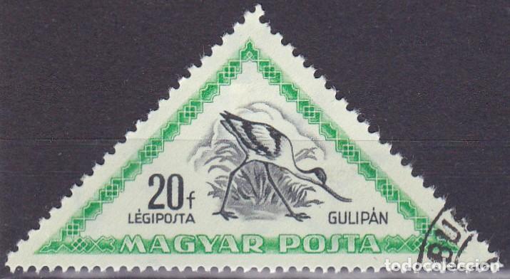 1952 - HUNGRIA - AVES - AVOCETA COMUN - CORREO AEREO - YVERT 119 (Sellos - Temáticas - Aves)