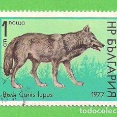 Sellos: BULGARIA - MICHEL 2597 - YVERT 2306 - FAUNA - LOBO. (1977).. Lote 108252371