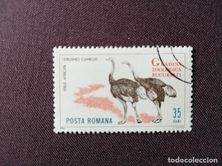 RUMANIA - VALOR FACIAL 35 BANI - AÑO 1964 - ZOOLÓGICO BUCAREST - FAUNA: AVESTRUZ AFRICANA - CON GOMA (Sellos - Extranjero - Europa - Bulgaria)