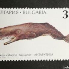 Sellos: BULGARIA, CETÁCEOS, CACHALOTE 1995 MNG (FOTOGRAFÍA REAL). Lote 208093448