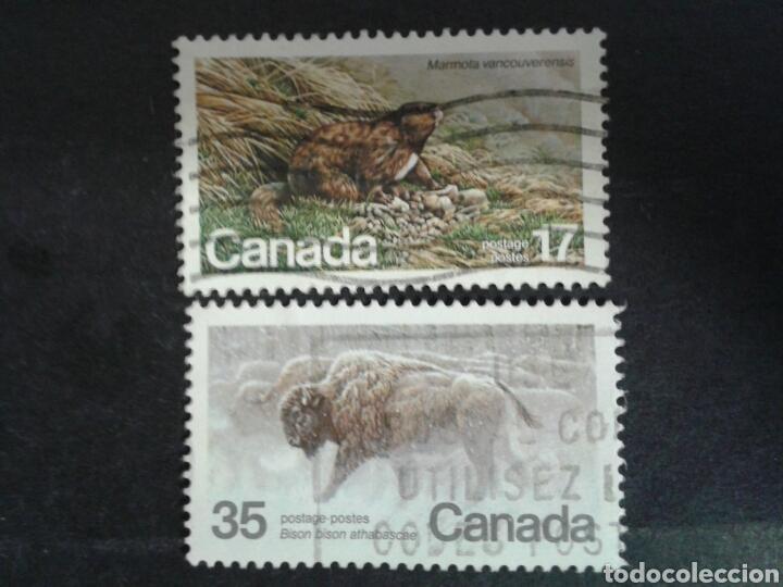 CANADÁ. YVERT 762/3. SERIE COMPLETA USADA. FAUNA. (Sellos - Extranjero - América - Canadá)