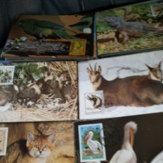 Sellos: SUPER LOTE 167 TARJETAS MÁXIMAS PRIMER DIA ANIMALES DIFERENTES. Lote 222438781